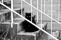 black cat on fremantle steps