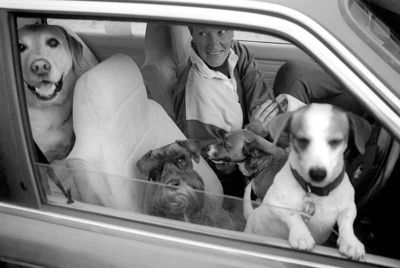 lady-4-dogs