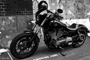 Harley at Ginos